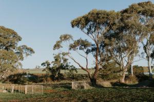 soho rose farm winter